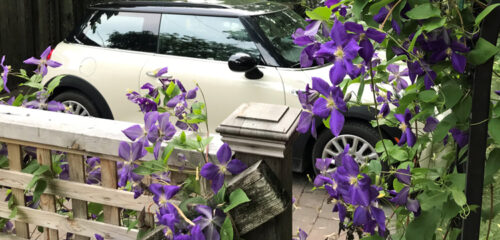 Mini Cooper in the driveway